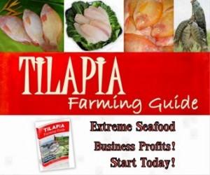 tilapia farming